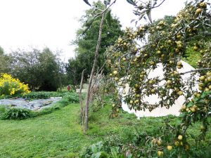 permaculture design services