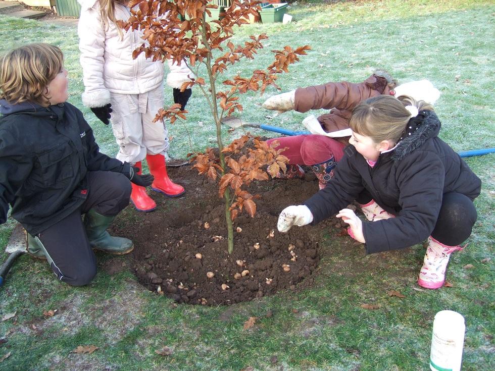 removing grass ensuring effective tree planting