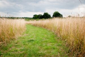 Winding path through long, tall grass in a sunny summer meadow