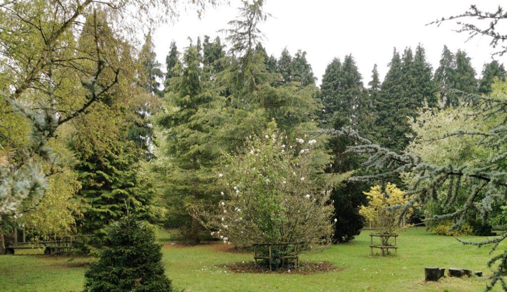 specimen trees planted for school arboretum 14 years later