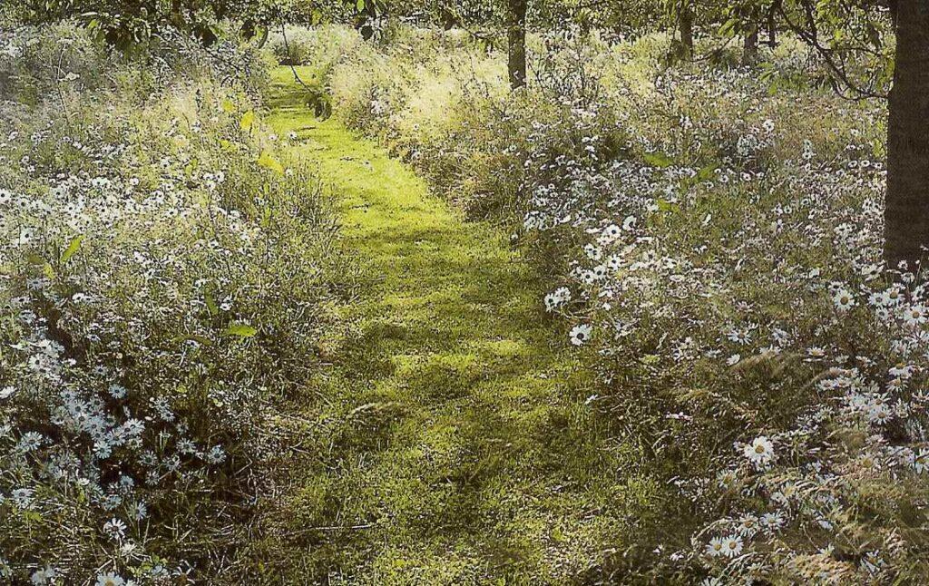grass path through orchard wit wild flowers