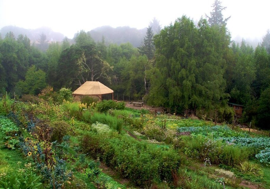 forest gardening example